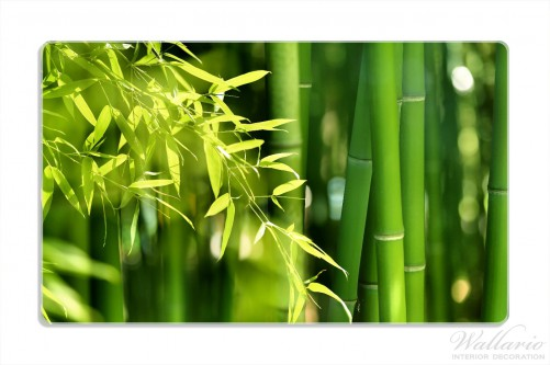 fr hst cksbrettchen bambuswald mit gr nen bambuspflanzen. Black Bedroom Furniture Sets. Home Design Ideas
